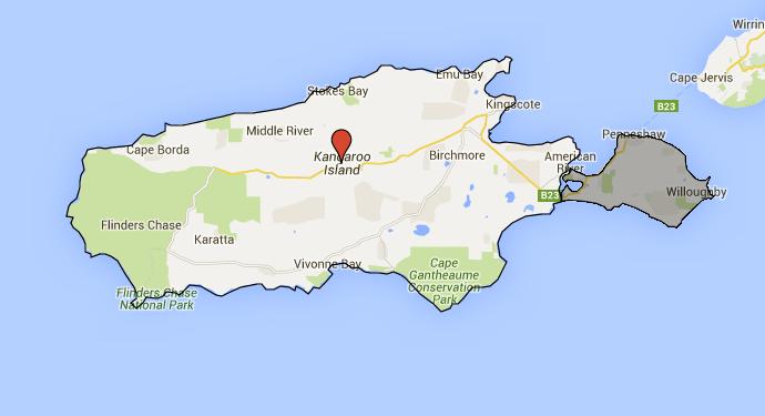 Kangaroo Island Begins Feral Cat Eradication Plan