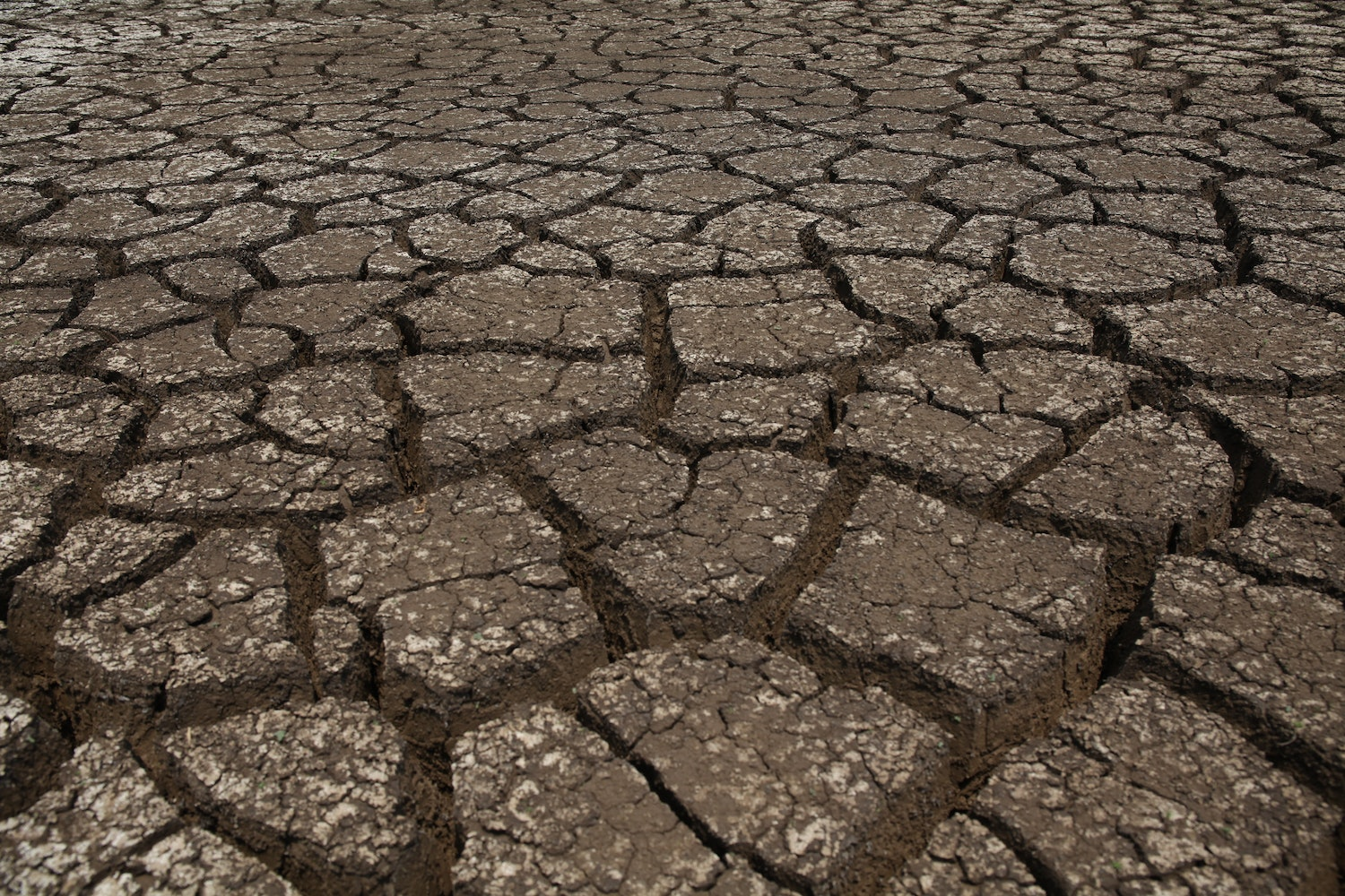 standing up to drought shorthand social